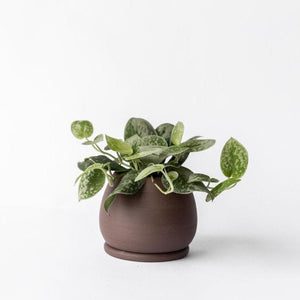 Small Standing Planter with Saucer- Chocolate