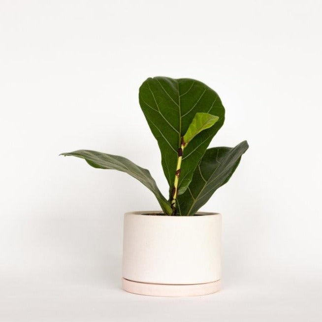 Tabletop Planter - Blush