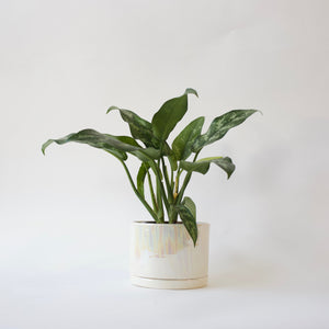Tabletop Planter - Unicorn