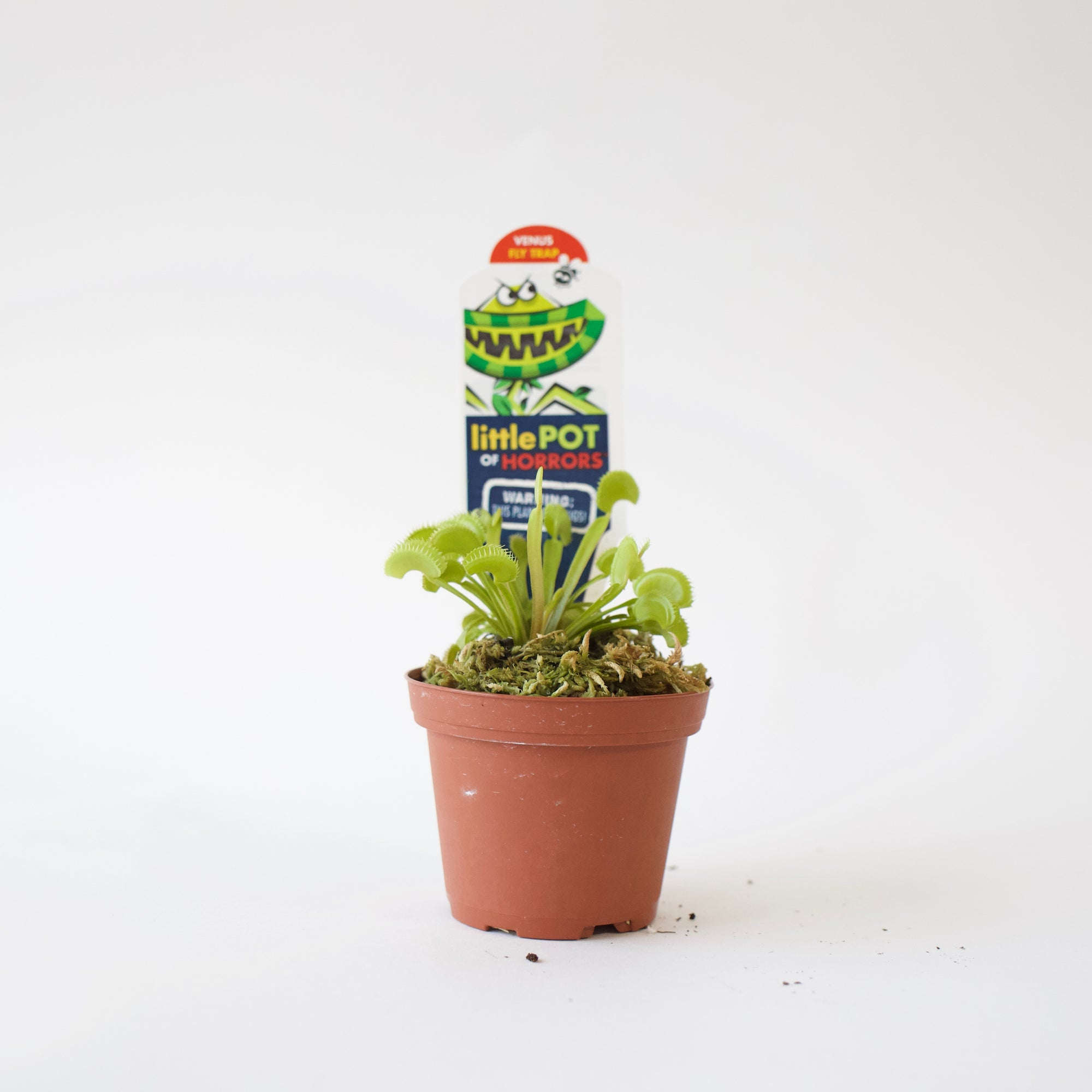 "3"" Venus Fly Trap"