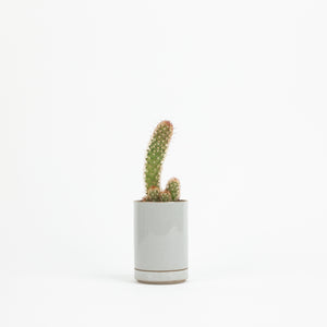 Fern - 8oz Candle