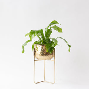 Gloria Planter with Stand