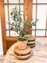 Load image into Gallery viewer, Potted Olive Bush - Leyland Blue