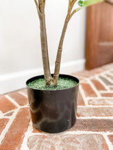 Load image into Gallery viewer, 3' Potted Fig Plant - Leyland Blue