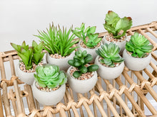 Load image into Gallery viewer, Succulent in Cement Pot (Set of 2)