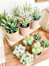 Load image into Gallery viewer, Paper Potted Succulents (Set of 2)