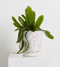 Load image into Gallery viewer, Banjo Pot Terrazzo White