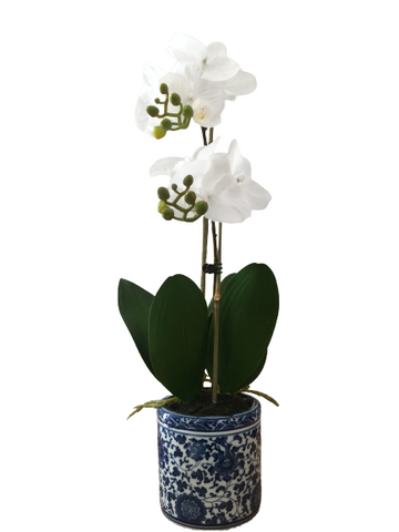Dynasty Phal Orchid 55cm - 2 Colours