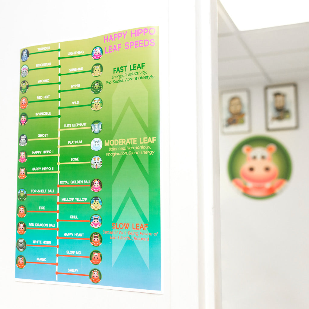 Photographic Image depicting the Happy Hippo Kratom Strain Chart in poster format. The Kratom Strain Chart shows different varieties of the best types of kratom, and their associated effects.