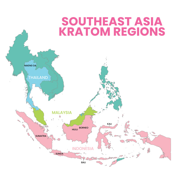 Infographic depicting a map of southeast asia _ color coding the various regions of where the different kratom strains originate