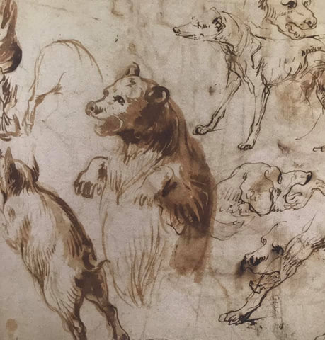 drawing of a bear by Frans Snyders (Flemish 1597-1657)