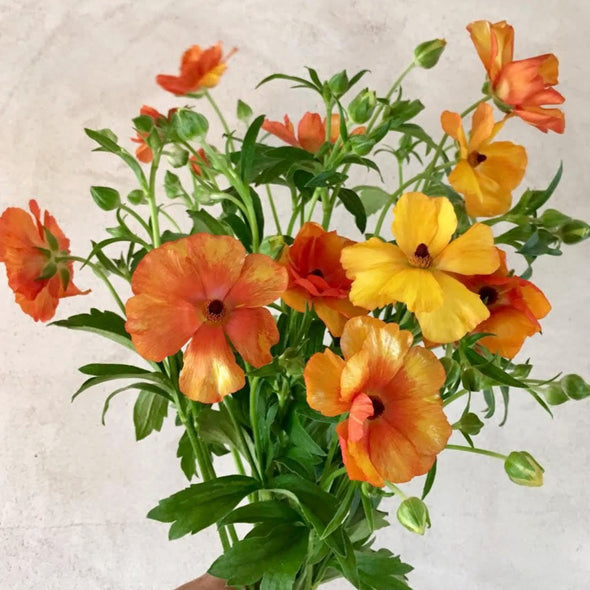 Fresh Cut Flowers Shipped || Orange Butterfly Ranunculus