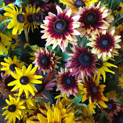 Seeds || Black Eyed Susan Mix