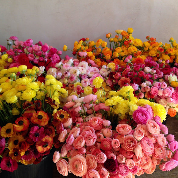 SALE! Fresh Cut Flowers Shipped || Ranunculus Mix
