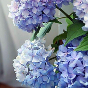 Load image into Gallery viewer, Happily Hydrangea Pink Picasso Kit