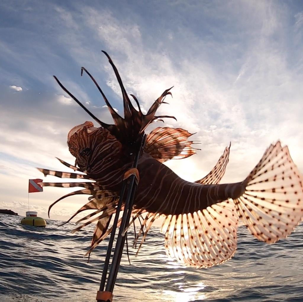 Lionfish Spear