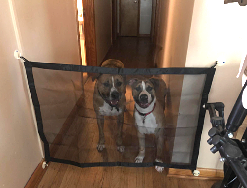 DogSavers Ultimate-Portable Dog Barrier - dogsavers