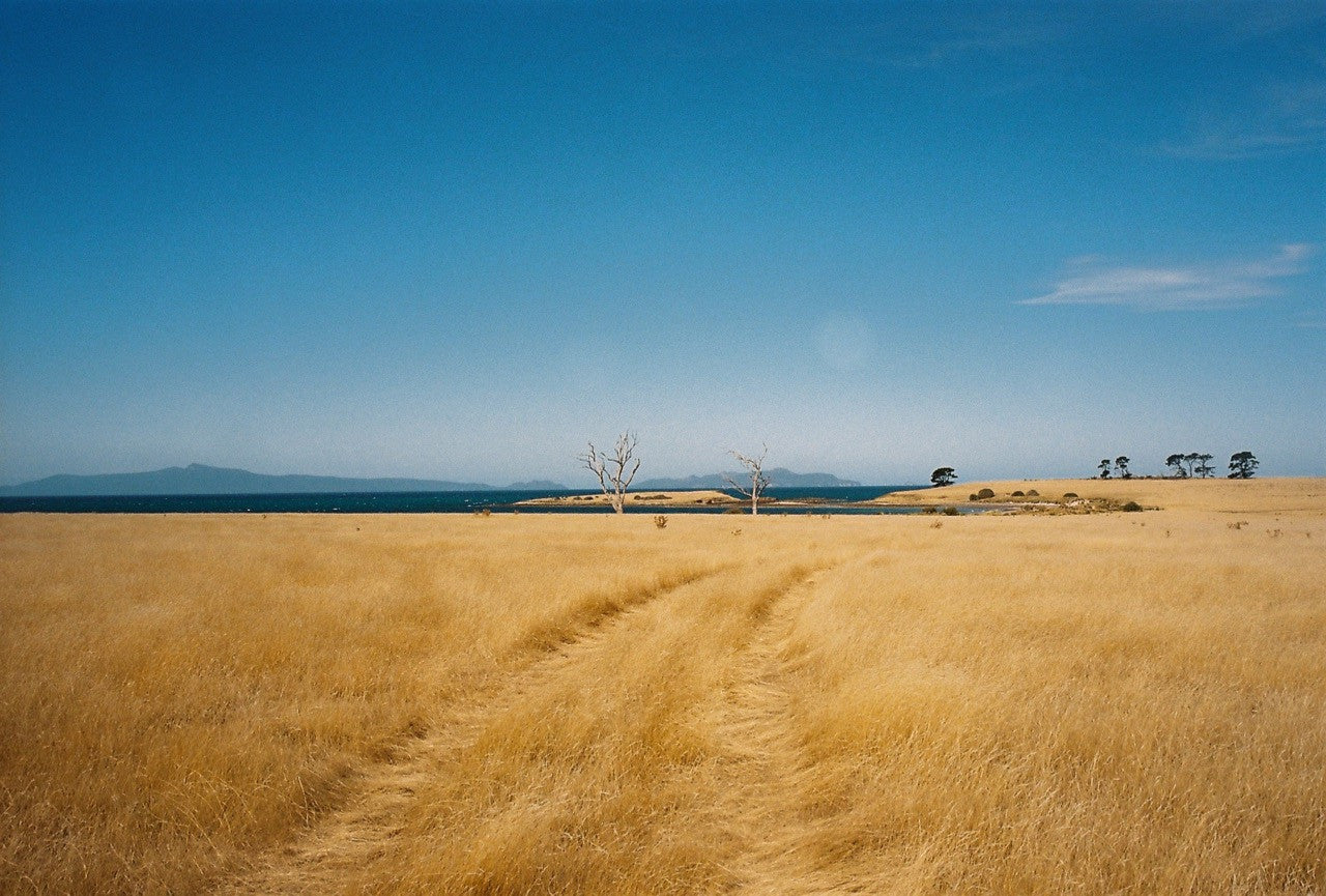 Dry and deserted in the bush on Tasmania's west coast