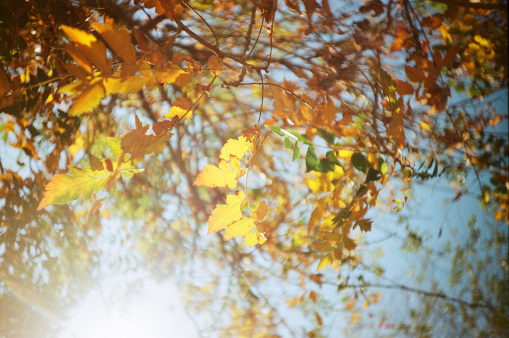 Fall Photography By Dane Peterson