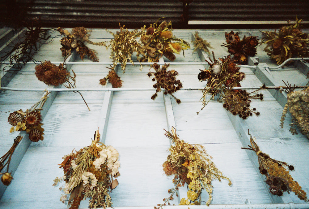 35mm photo of dried flowers hanging on a Venice Beach wall with The Unlikely Florist