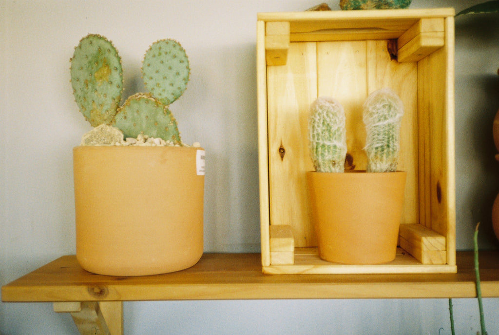The Cactus Curators of Highland Park