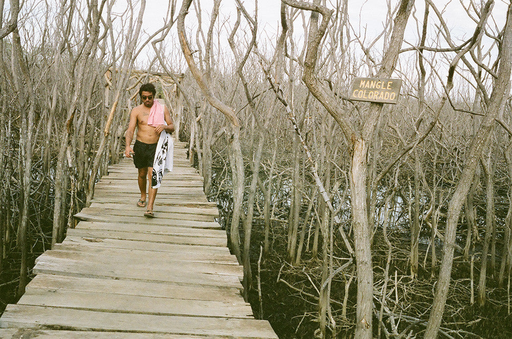 Photo of Jared Mell Walking through Costa Rican mangroves