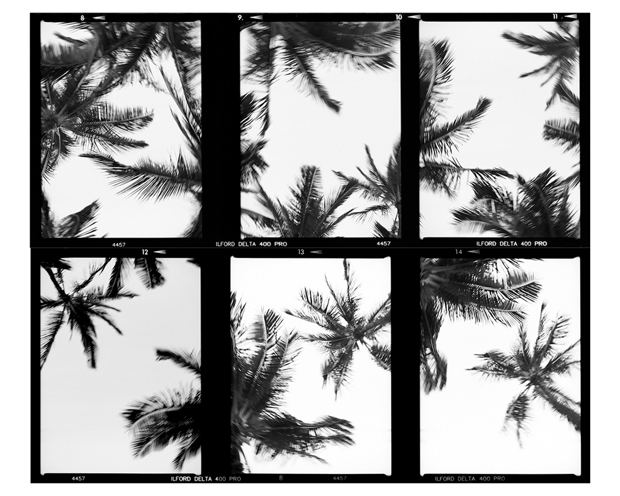 Palm Tree Contct film sheet by Dane Peterson