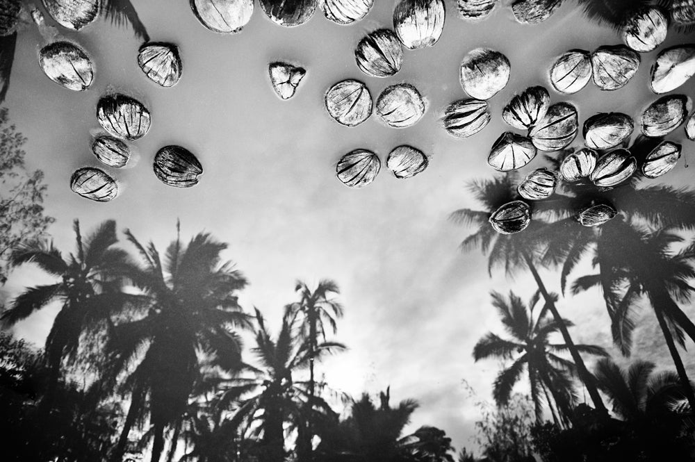 photo of coconuts and palm tree reflections in the water by John Hook