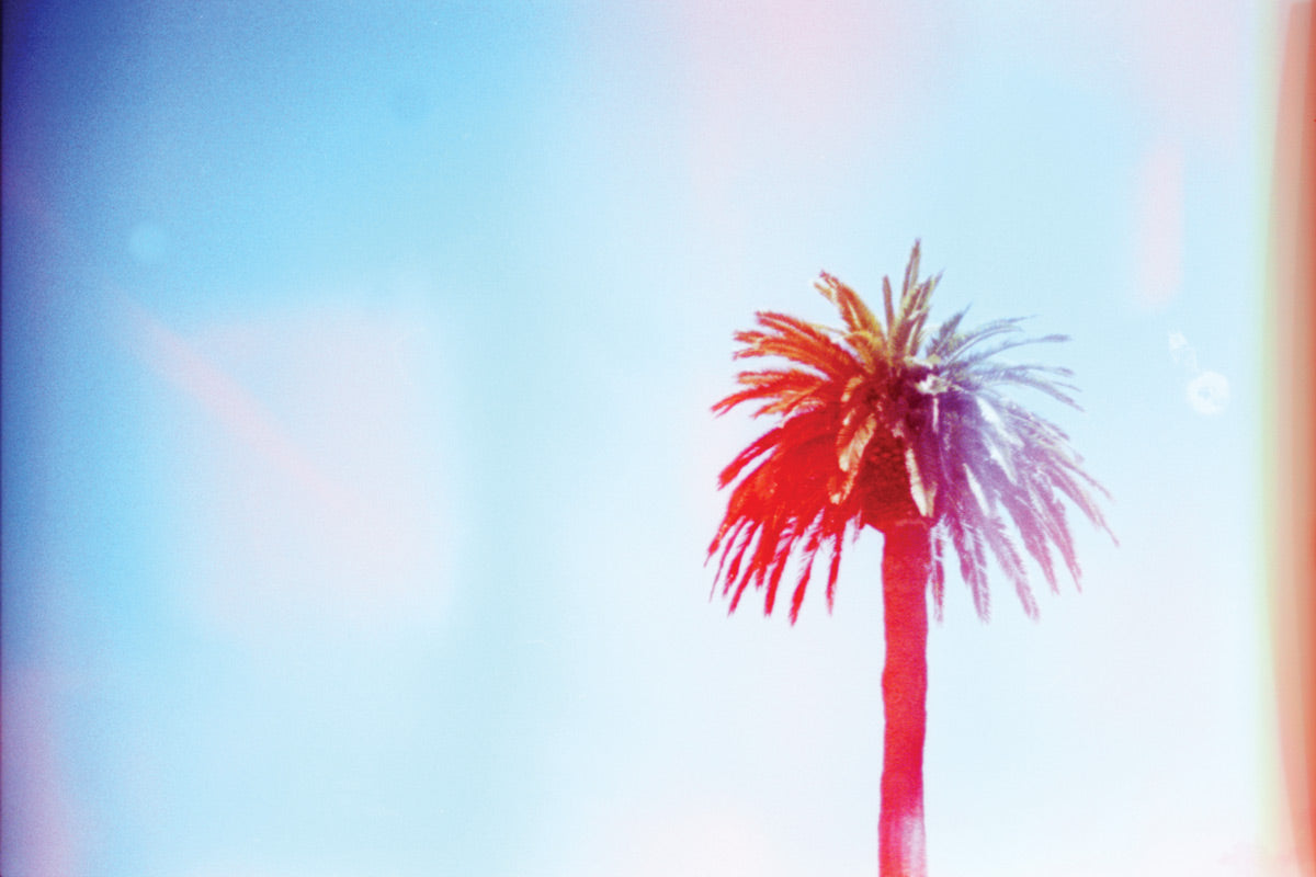 Palm Tree photo by Ryan Tatar