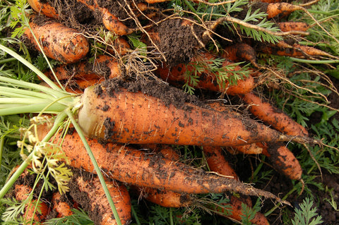 Carrot a day keeps your skin at bay