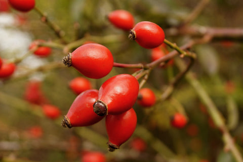 Rosehip for anti-aging