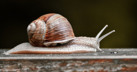 snail slime for better complexion