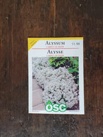 Alyssum Carpet of Snow Seed