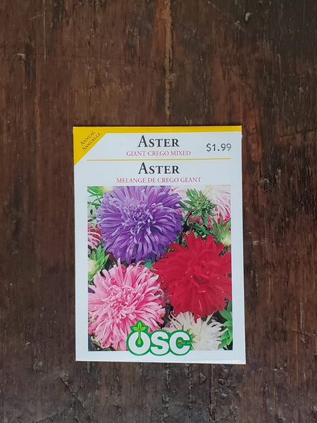 Aster Giant Crego Mixed Seed