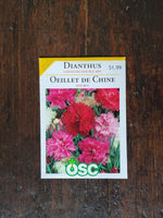 Dianthus Chinensis Double Mix Seed