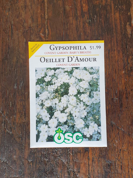 Gypsophila Covent Garden (Baby's Breath) Seed