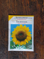 Sunflower Mammoth Russian Seed