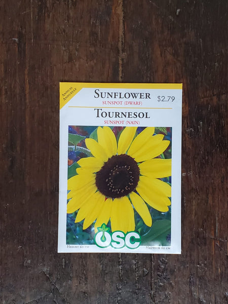 Sunflower Sunspot Dwarf Seed