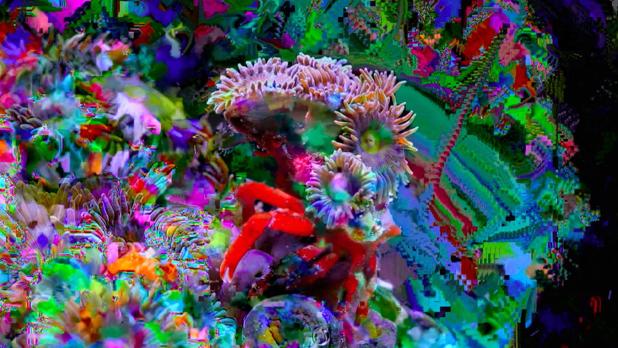 Film Still from Miami-based studio Coral Morphologic. Photo © Coral Morphologic