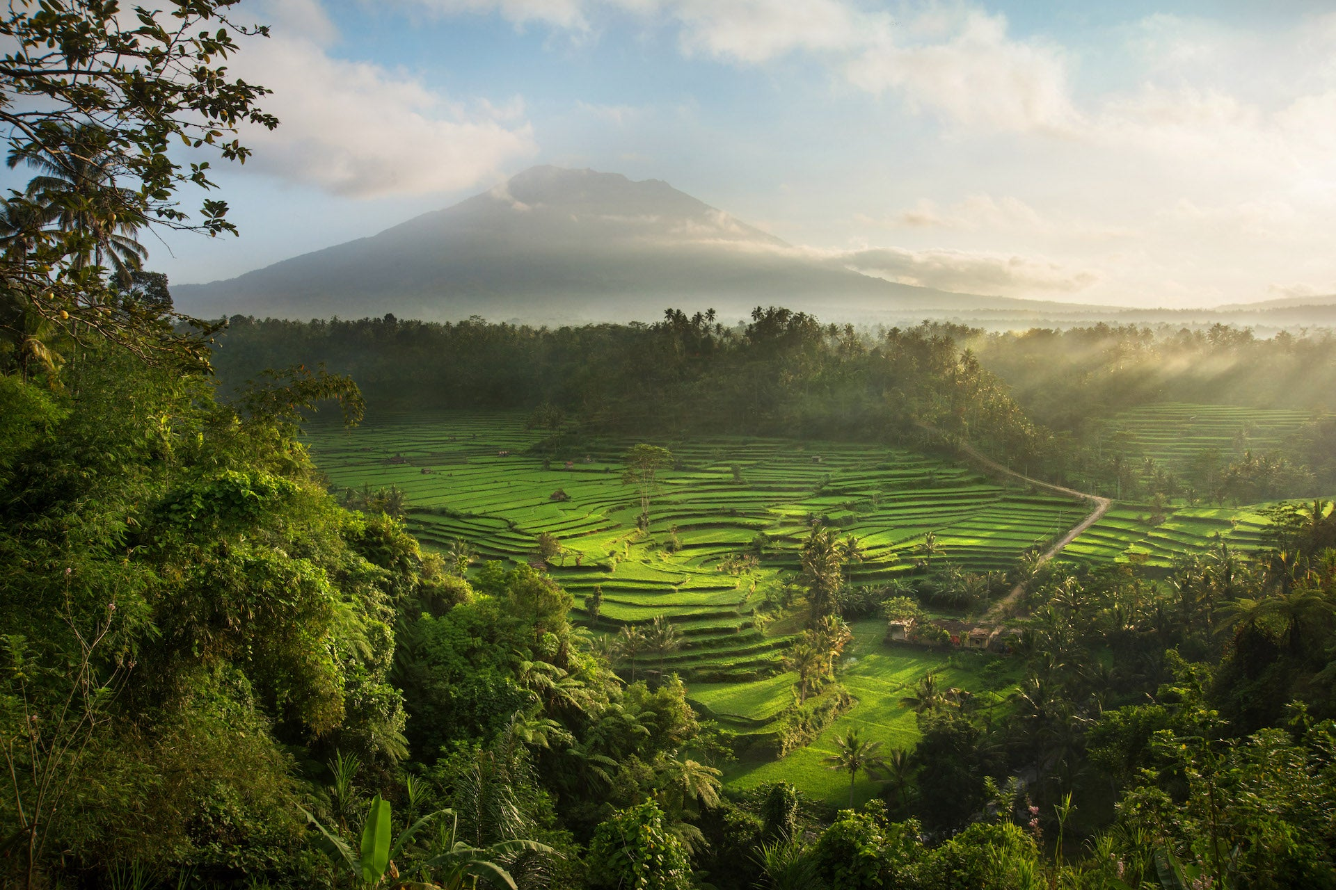 A view over the sacerd Mahagiri rice terraces, a small portion of the 1,000-year-old agrarian system known as the subak, which is unique to the island of Bali. Photo © David Lazar; from the book Lo-TEK, courtesy of Julia Watson