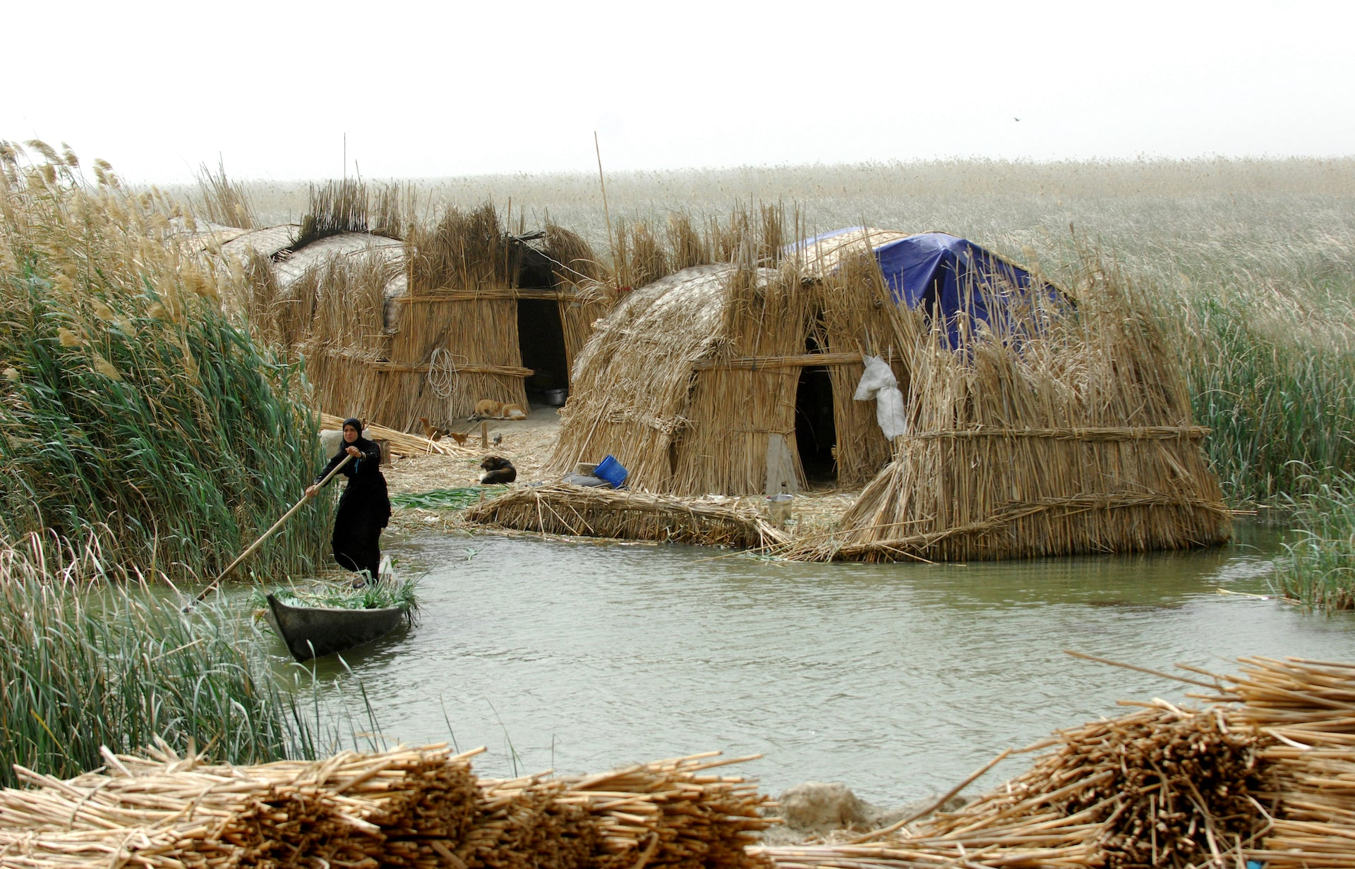 Qasab reed has long served as raw material for homes, handicrafts, tools, and animal fodder with the distinctive mudhif houses of the Ma'dan people appearing in Sumerian artwork from 5000 years ago. Photo © Esme Allen; from the book Lo-TEK, courtesy of Julia Watson