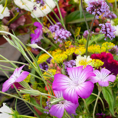 Flowers at the Market (Purple)