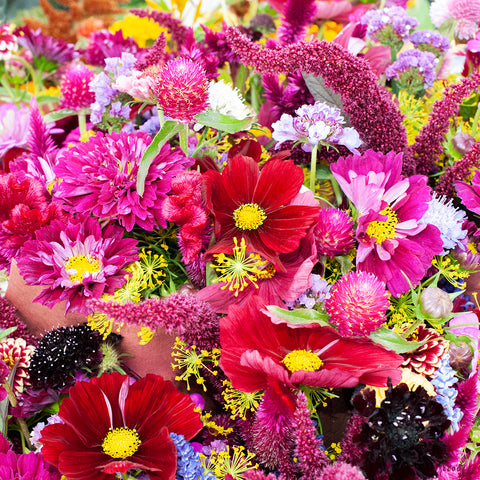 Flowers at the Market (Red)