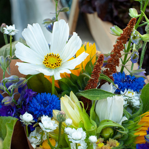 Flowers at the Market (White/Blue)