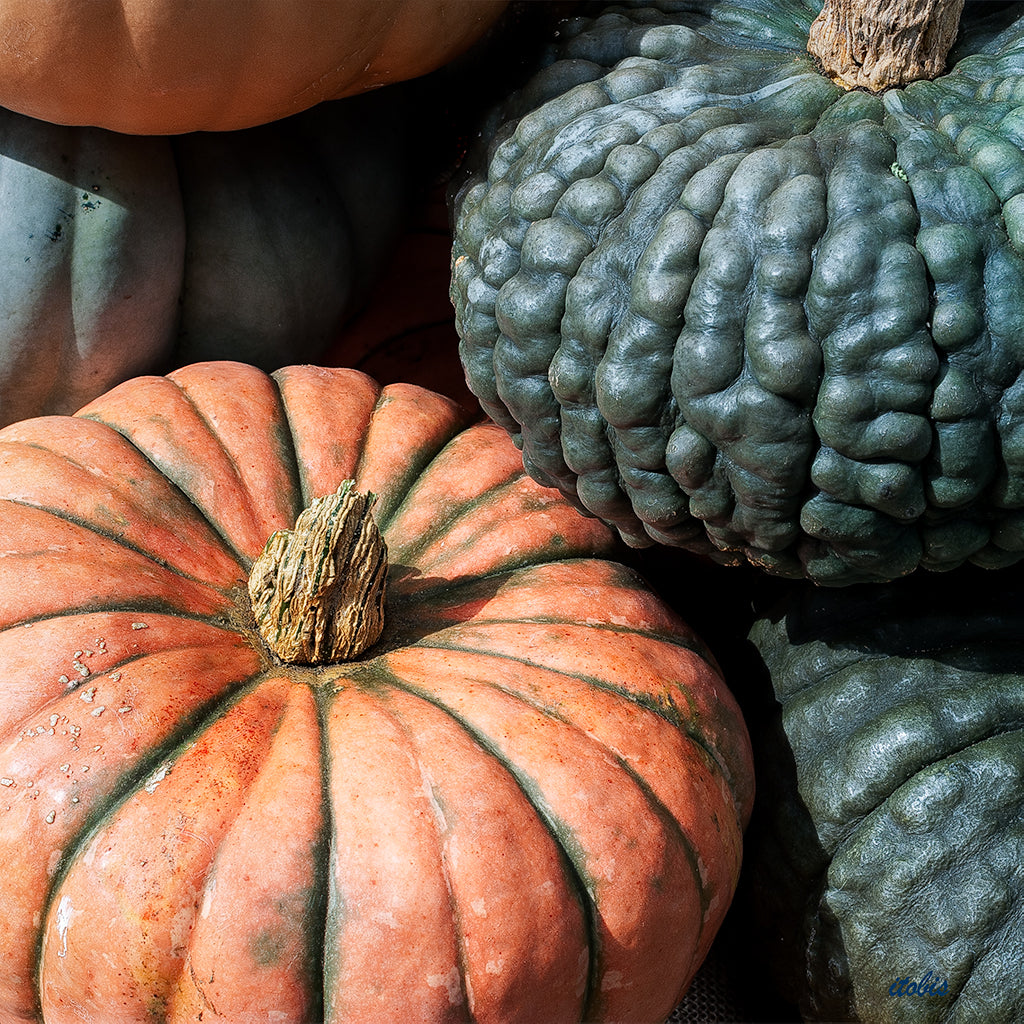Pumpkins at the Market