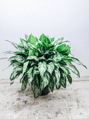 Easy Care Plants For All People