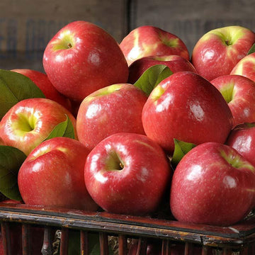 Red Apple Pink/Fuji 6pc/pk(0.9kg)