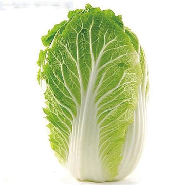 Wombok (Chinese Cabbage) 1pc/pk