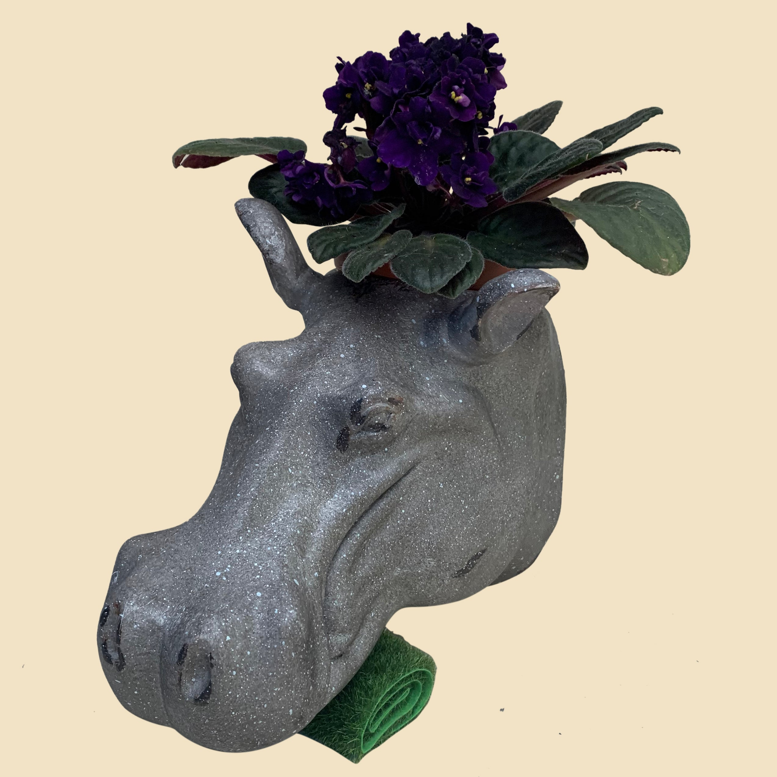 Hasina the Hippo wall planter