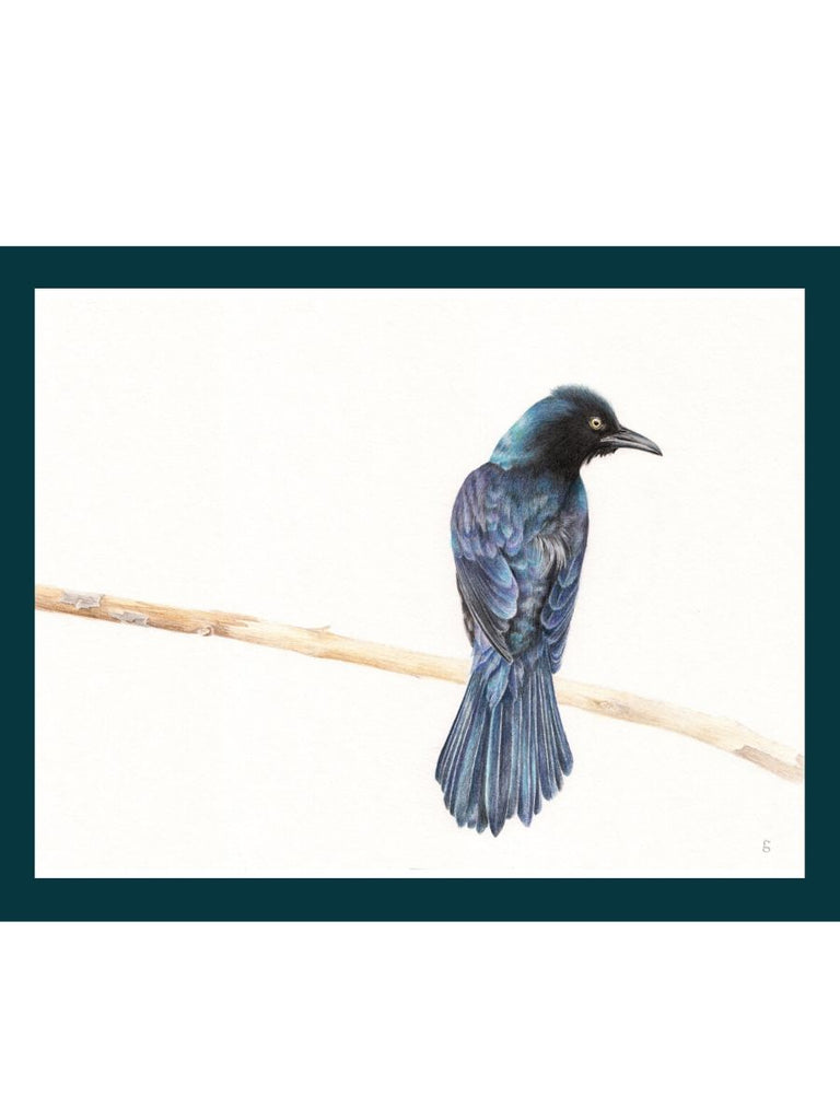 Common Grackle Print